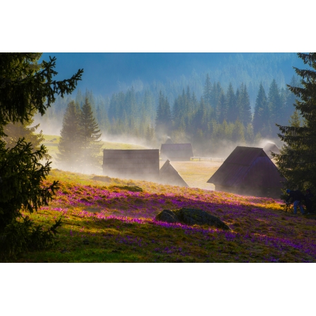 Wydruk papier foto - Polana Chochołowska