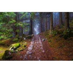 Wydruk na piance - W tatrzańskim lesie